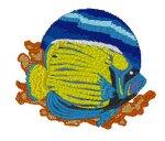 Emperor Angelfish 2