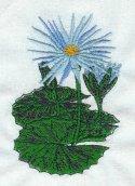 Bagdad Tropical Lily