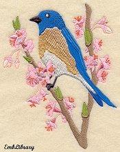 Bluebird Spring
